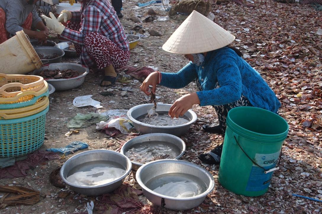 Sortiert den Fischfang: Frau am Fischerhafen von Mui Ne.