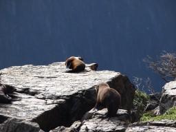 Elfenhafter Milford Sound